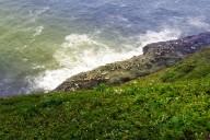 oregon-sea-lions